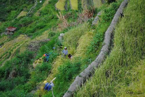 Trail to Batad