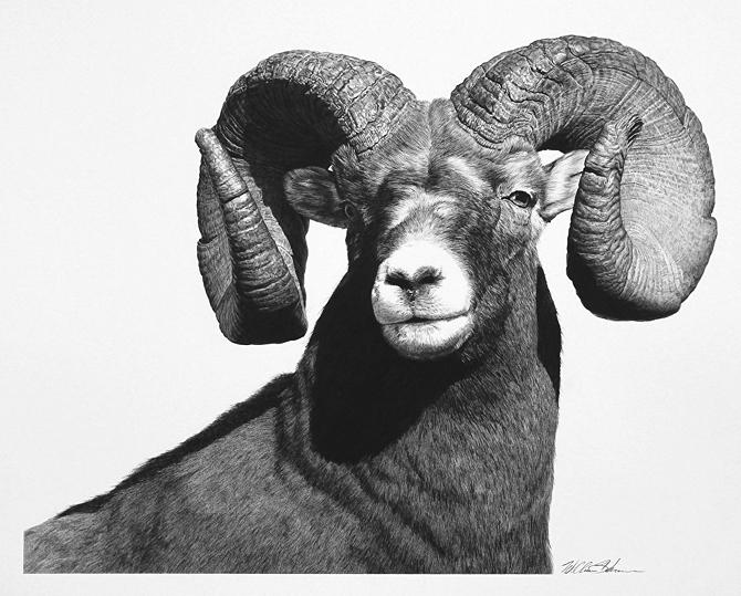 12-The-Boss-Ram-William-Bill-Harrison-Majestic-Wildlife-Carbon-Pencil-Drawings-www-designstack-co
