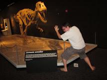 Chicago Phoenix Dino Museum - Torvosaurus