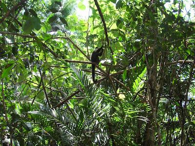 Mono, Parque Manuel Antonio, Costa Rica, vuelta al mundo, round the world, La vuelta al mundo de Asun y Ricardo, mundoporlibre.com