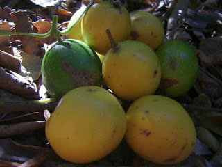 keule fruit images