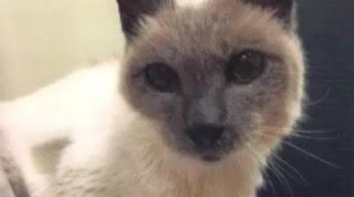 Kucing Paling Tua Bernama Scooter