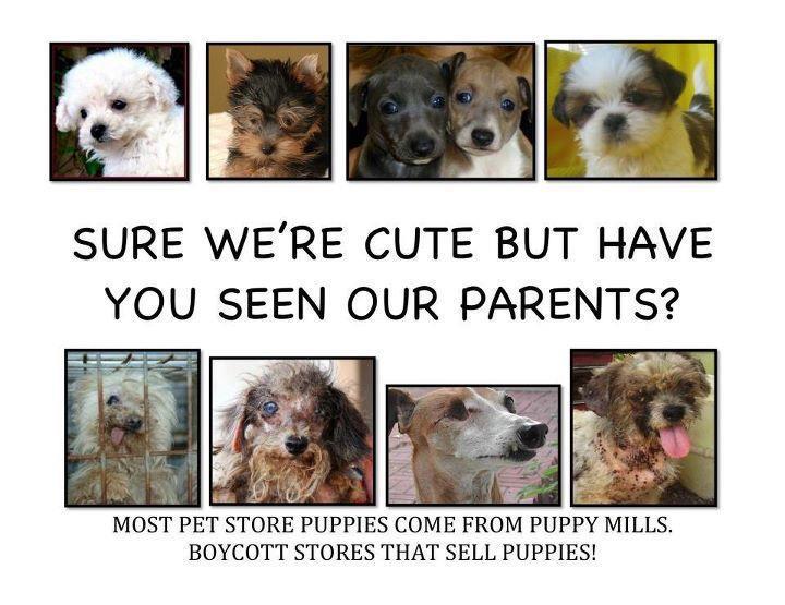 SD Animal Defense Team: STOP PUPPY MILL SALES IN SAN DIEGO!