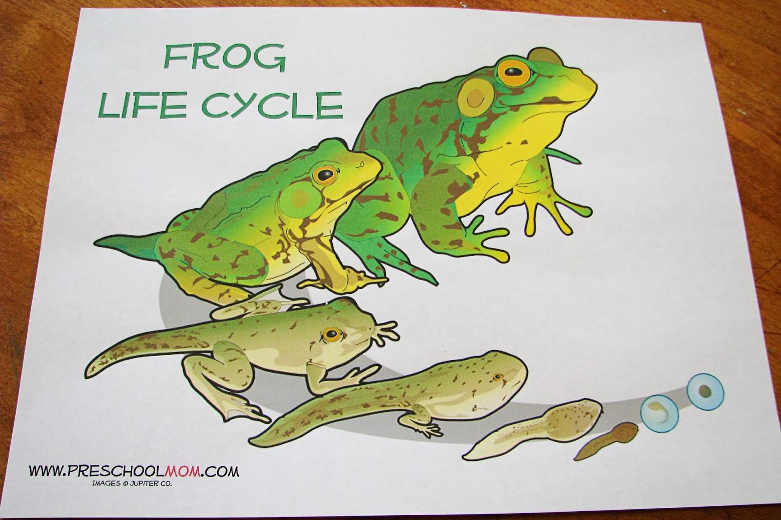 Mommy S Little Helper Letter F Frog Preschool Theme