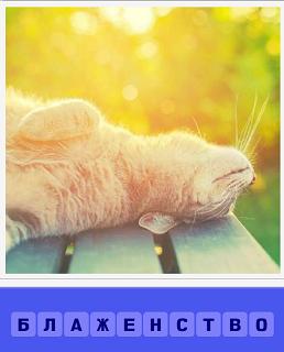 блаженство кошки под солнечными лучами на столе