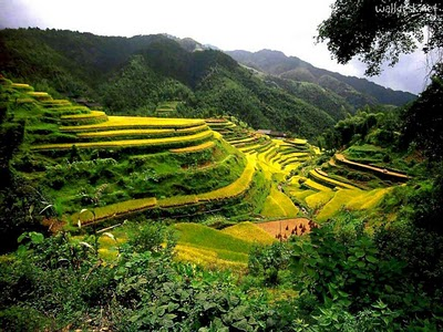 Sawah Padi Bertingkat Longji (Dragon's Backbone Terraced Rice Fields)