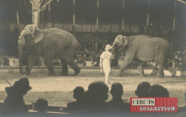 tour de piste des éléphants