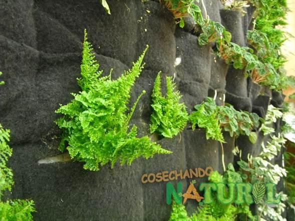 Pared verde - Plantas en la pared ...