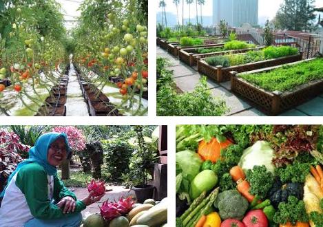 Peluang Usaha Agrobisnis Yang Bisa Dijalankan Dari Rumah