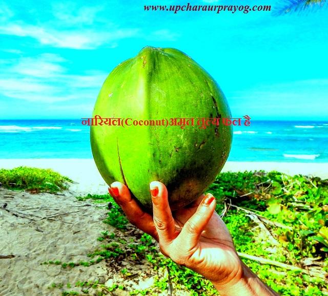 नारियल(Coconut)अमृत तुल्य फल है
