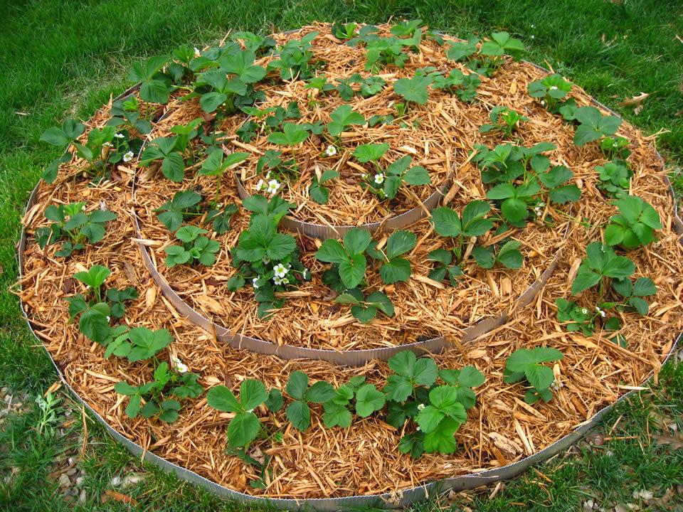 The Garden Of Eaden October 2011