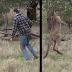 Cosas que sólo pasan en Australia: Hombre se pelea a golpes con un canguro para evitar el secuestro de su perro