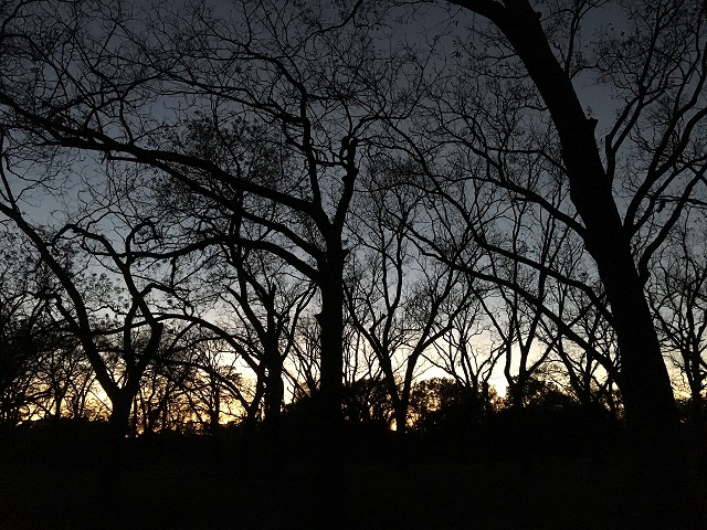 An early morning during a training exercise with Civil Air Patrol, I was treated to this beautiful pre-dawn silhouette in a pecan grove.