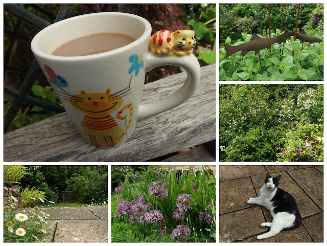Veg Plotting's photos for #mygardenrightnow