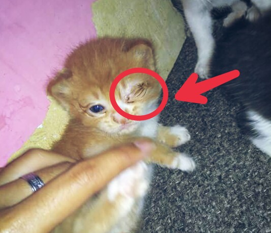 Penyebab Mata Kucing Belekan Dan Berair - Berbagai Sebab