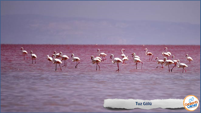 Tuz-Golu