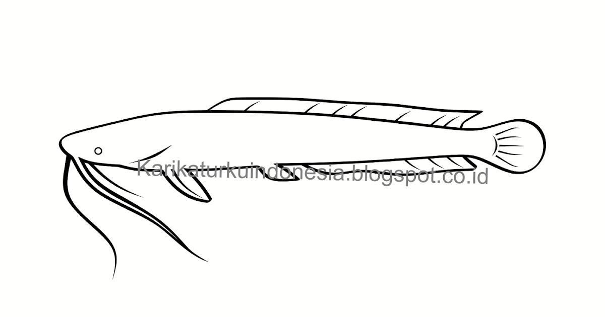 Sketsa Gambar Ikan Lele Garlerisket