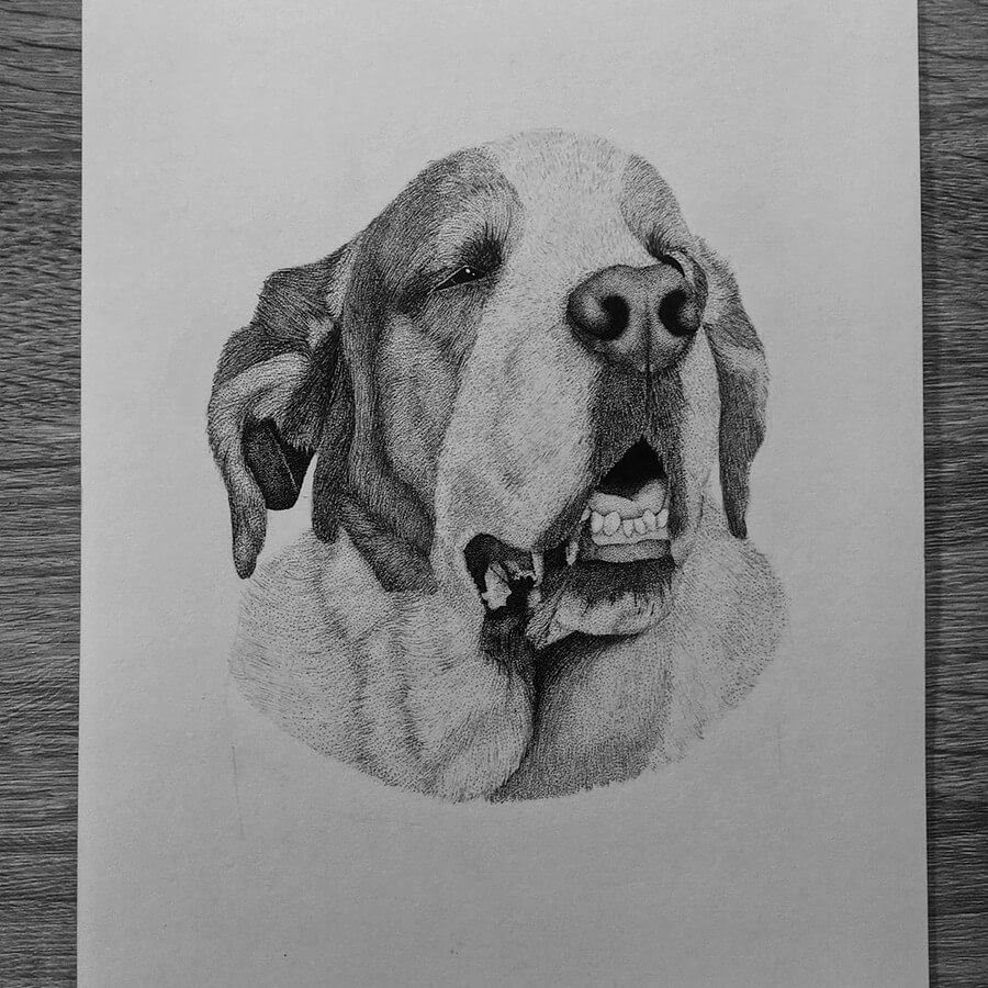 09-St-Bernard-Paige-Bates-Stippling-Drawings-www-designstack-co