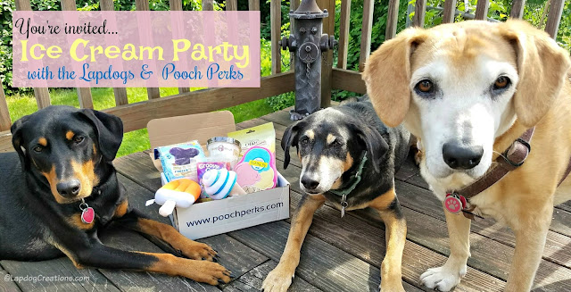 3 rescue mixed breed dogs subscription box