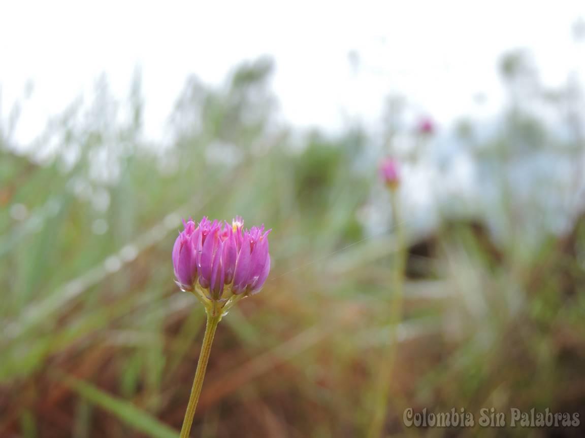 pequeña y hermosa flor
