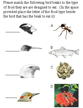 A school of fish: Adaptations and Bird Beak activity