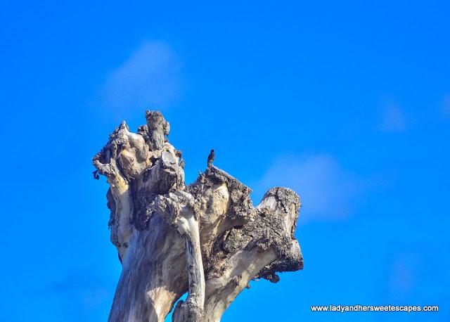 bird watching in Mahe Seychelles