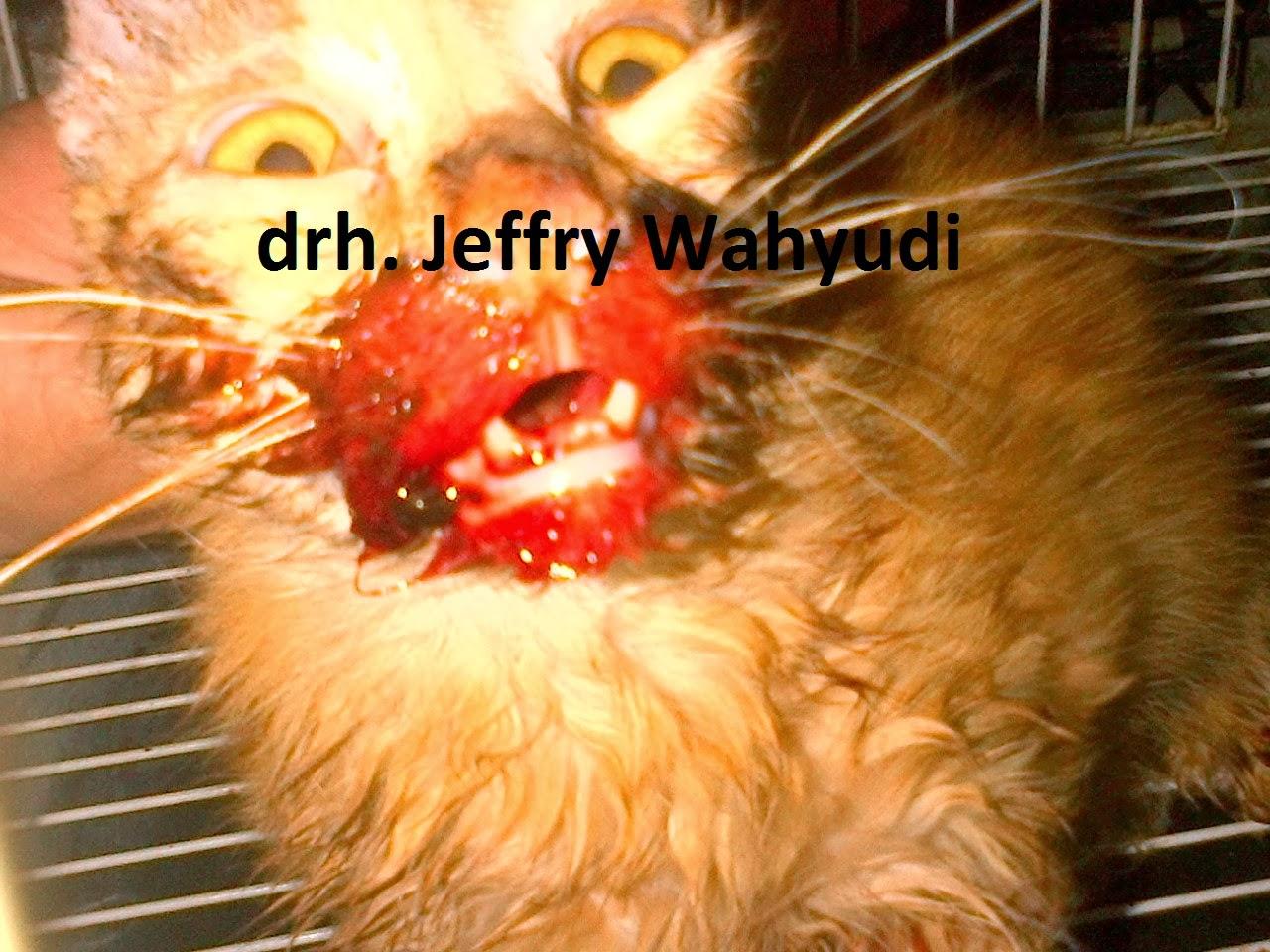 PAWS &CLAWS VET CLINIC: Feline panleukopenia