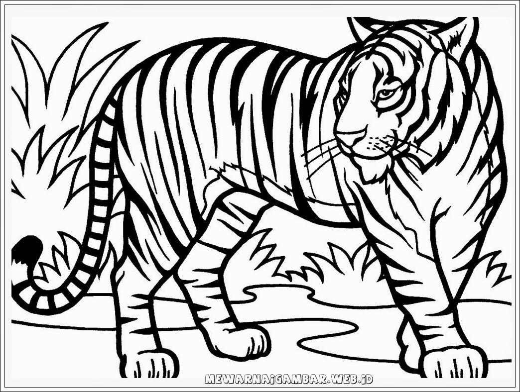 Sketsa Gambar Binatang Harimau