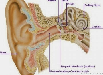 Tak Perlu Dibersihkan, Telinga Punya Sistem Pembersihan Diri