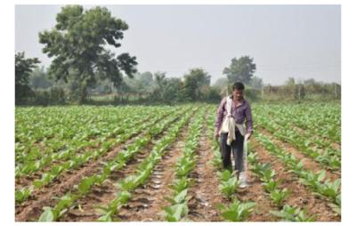 Dharmaj farm