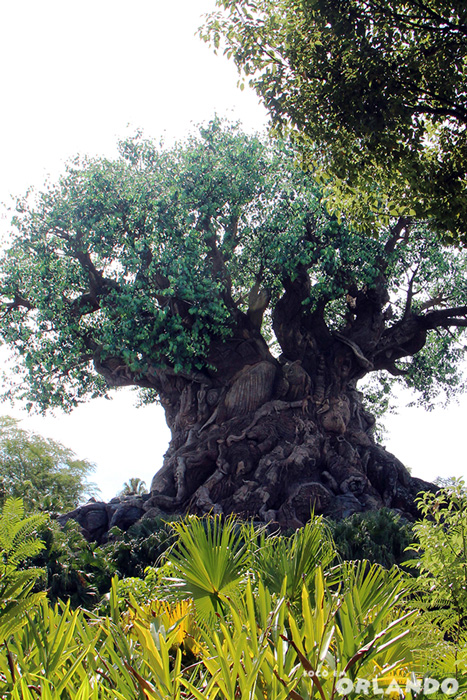 Tree of  Life, Disney's Animal Kingdom, Orlando