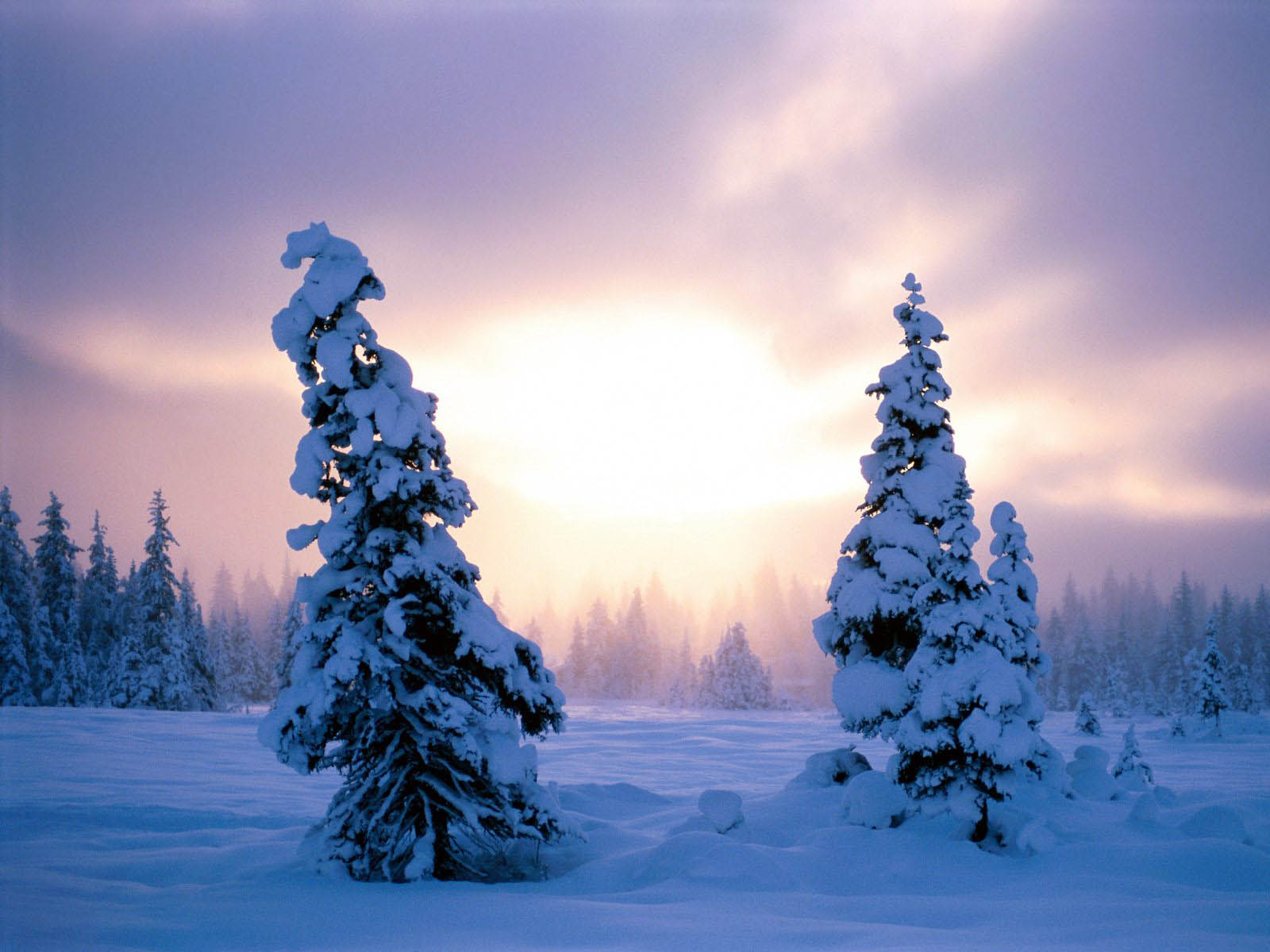 wallpapers: Winter Backgrounds