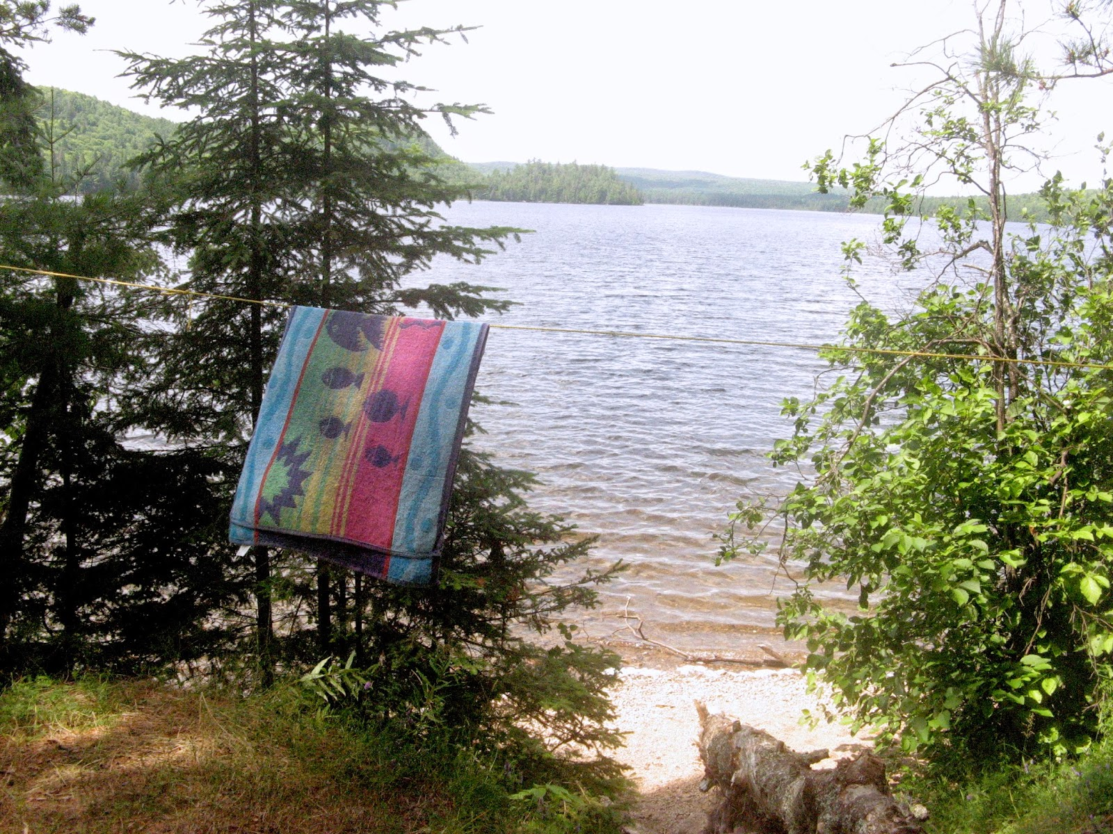 View up Booth Lake toward the Opeongo River, Algonquin Park