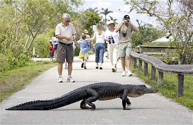 worlds-top-12-most-visited-popular-National-Park