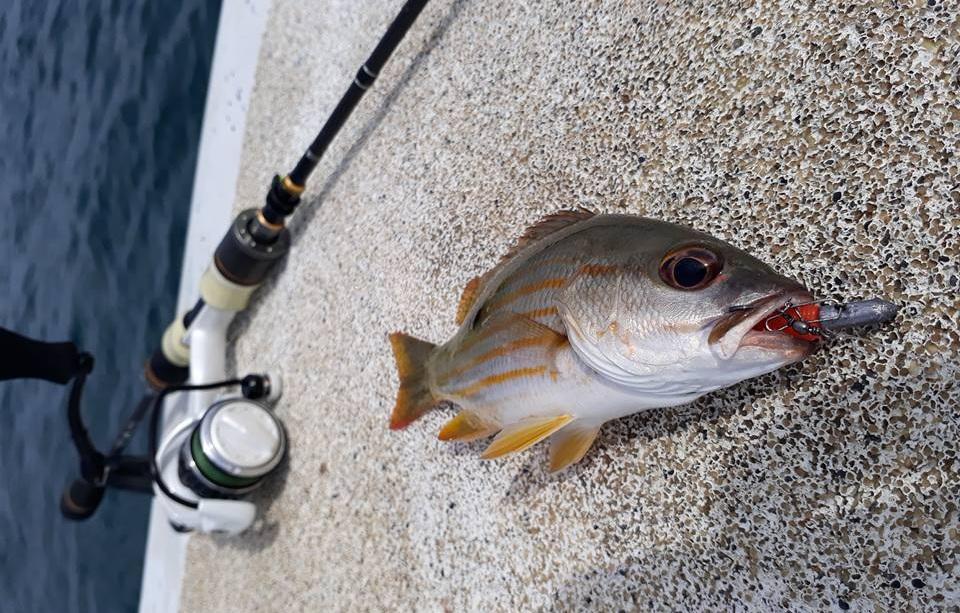 jenis umpan mancing di laut pinggir rh ariyacartoons blogspot com