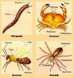 Artrópodes, Que São Artrópodes?