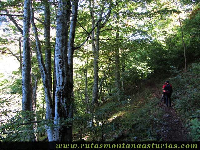 Ruta de los Arrudos y Corteguerón: Sendero entre bosque