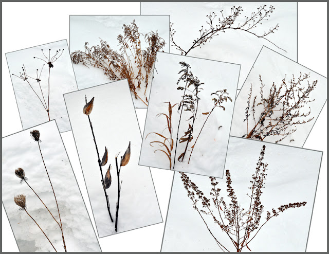 dried native plants to use in an arrangement
