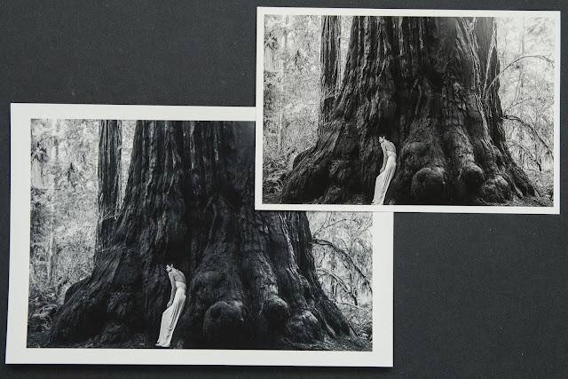 Digital Silver Imaging Inkjet Prints