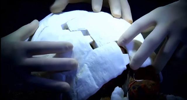 Freddy jadi Kura-Kura Pertama dengan Cangkang dari Printer 3D