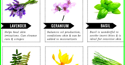 12 Best Essential Oils For Beautiful, Clear Skin