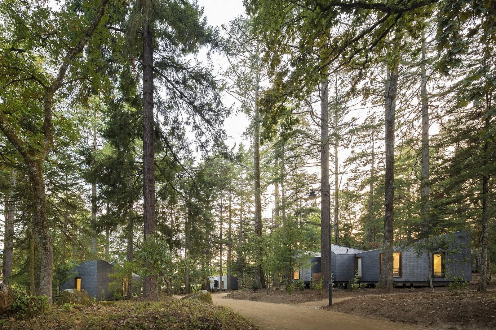 Sustainable resort in forest