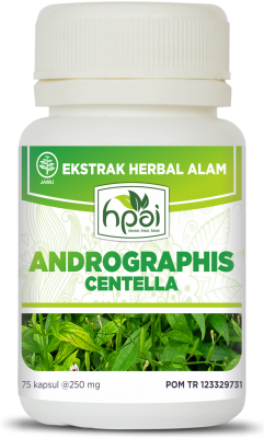 Andrographis obat herbal liver