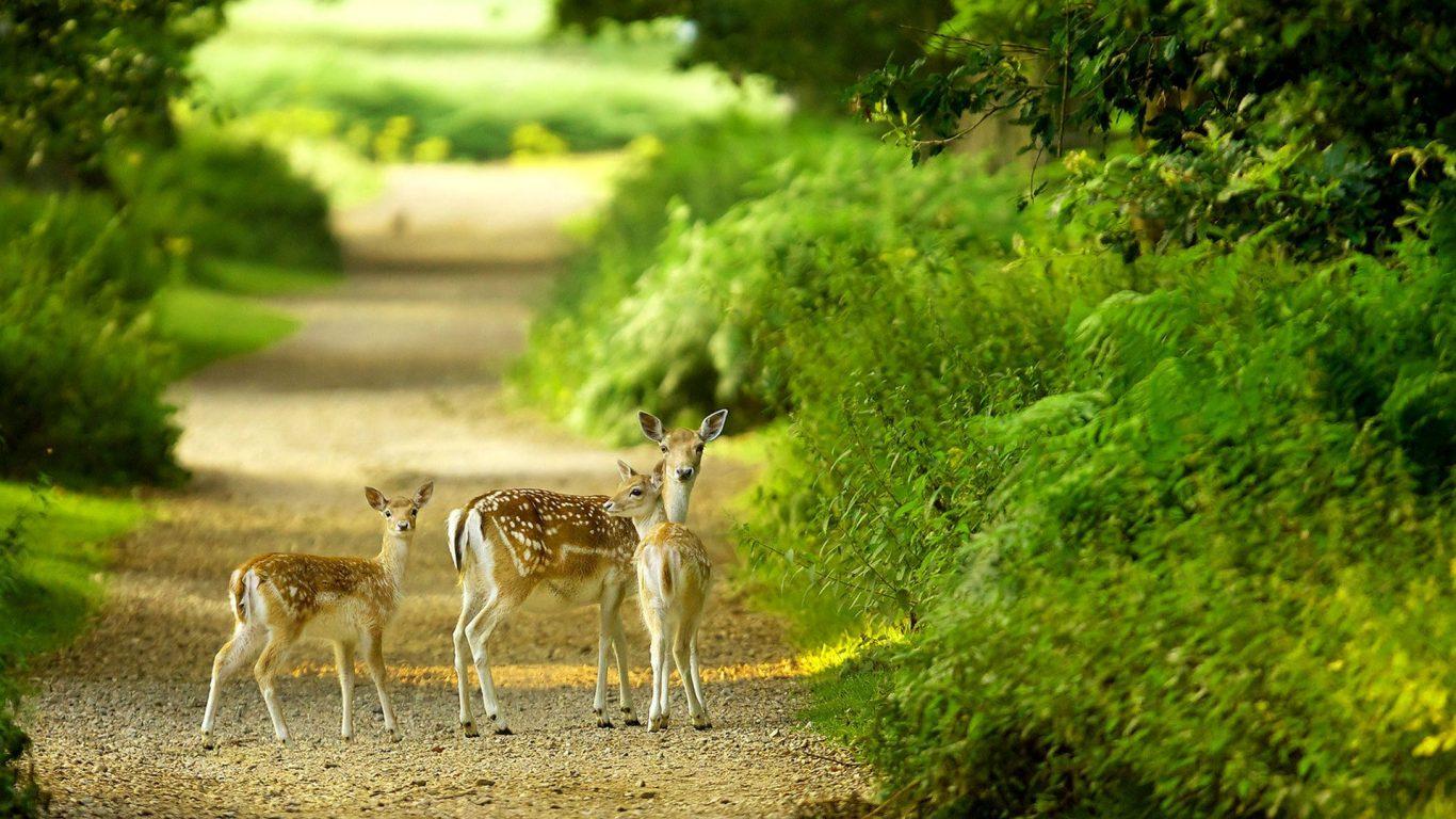100 Hình ảnh thiên nhiên tuyệt đẹp, hình ảnh phong cảnh thiên nhiên