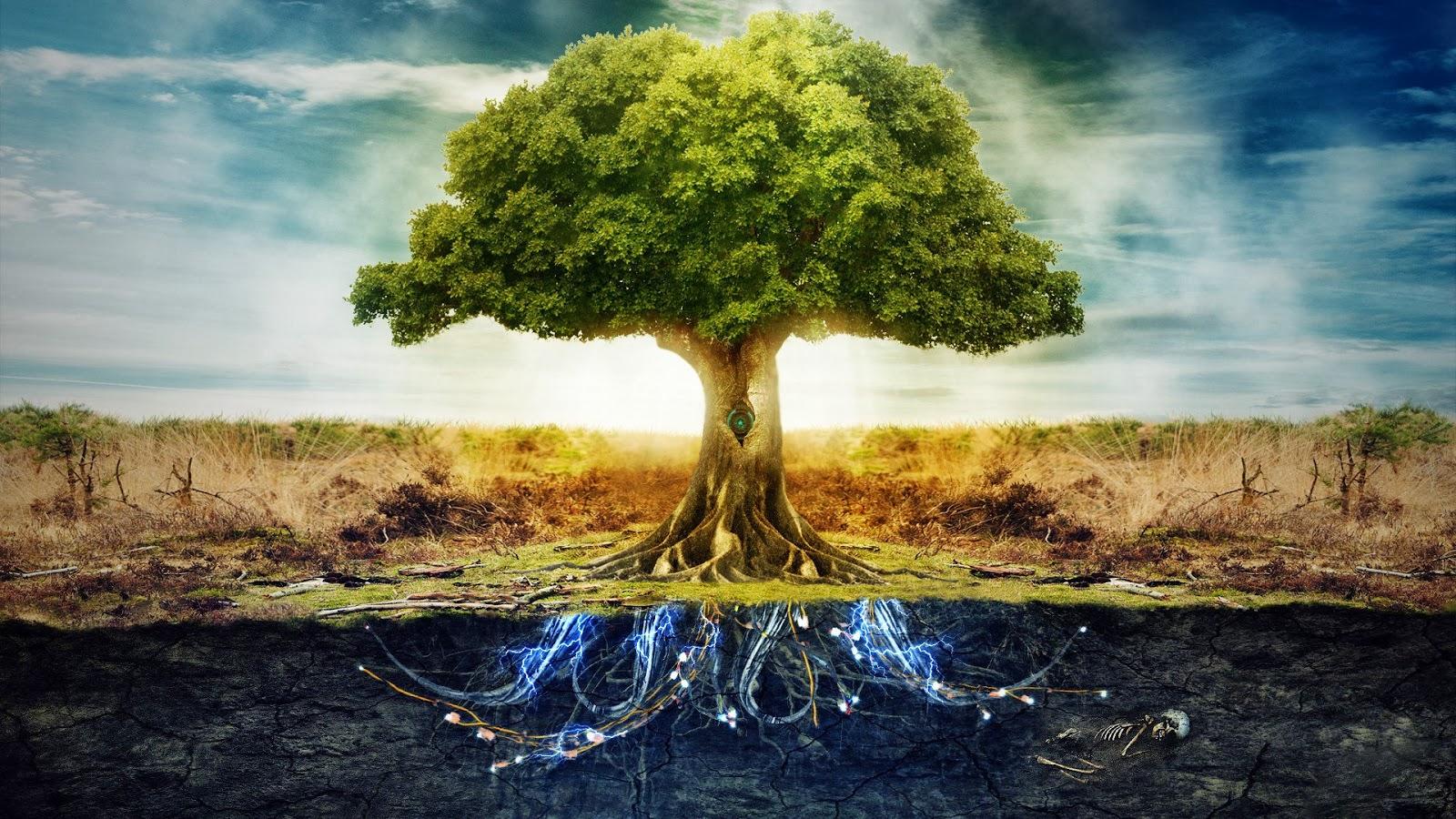 proprietățile terapeutice ale copacului de bani în varicoză