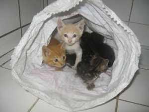 gatito-abandonado-huerfano-rescatar