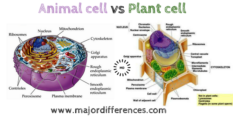 Major Differences Difference Between Plant Cell And Animal Cell