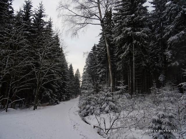 Σκηνή από το χιονισμένο δάσος στη Βαυαρία / From the snowy forest in Bavaria, Germany