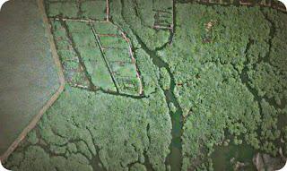 Kementerian Lingkungan Hidup dan Kehutanan Target Peta Mangrove di Papua pada 2019