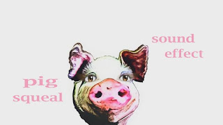 learn pig sounds